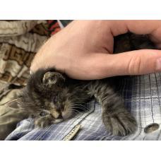 Отдам котенка в хорошие руки, забрал с улицы