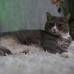 Кошечка Бони, 6 лет