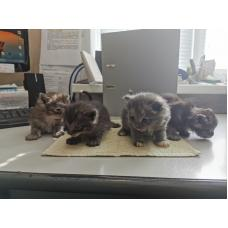4 Котёнка в дар