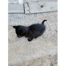 Котенок в добрые руки (котик)