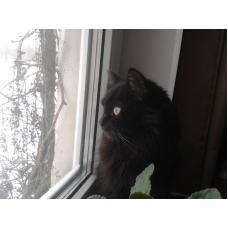 Кошка Марфуша ищет добрых хозяев
