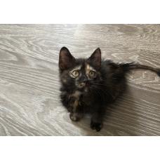 Котёнок-девочка в хорошие руки