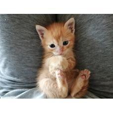 Рыжий котенок ищет себе дом