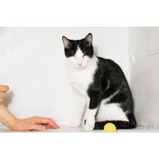 Котик Гамлет в добрые руки.