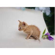 Котенок в дар в добрые руки